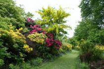 Rhododendrons at Nawton Towers