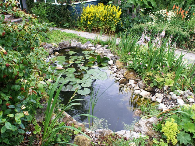 Garden talks maintaining the garden for Maintaining a garden pond